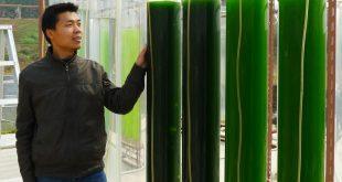 Vaasan yliopistosta monitieteisessä levätutkimushankkeessa ovat mukana Vaasan Energiainstituutin tutkimusjohtaja Erkki Hiltunen, tutkija Liandong Zhu energiatekniikan yksiköstä sekä tohtorikoulutettava Petra Berg markkinoinnin yksiköstä.
